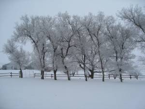 frosted-trees-img_16341
