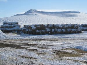deer-in-hay-lot-img_1732