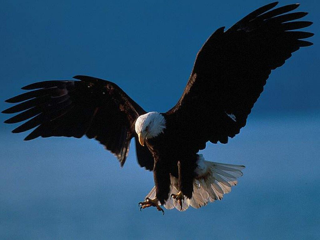 Mount Up With Wings Like Eagles   Hallelujah