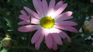 Post 2012 05 20 IMG_1295
