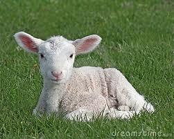 Post 2012 08 05 Lamb