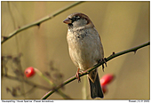 Post 2014 10 29 Sparrow