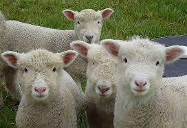 Post 2015 07 17 sheep